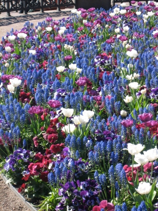 Some of the beautiful spring flowers.